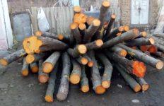 کشف ۱۰ تن چوب جنگلی قاچاق در شهرستان لاهیجان